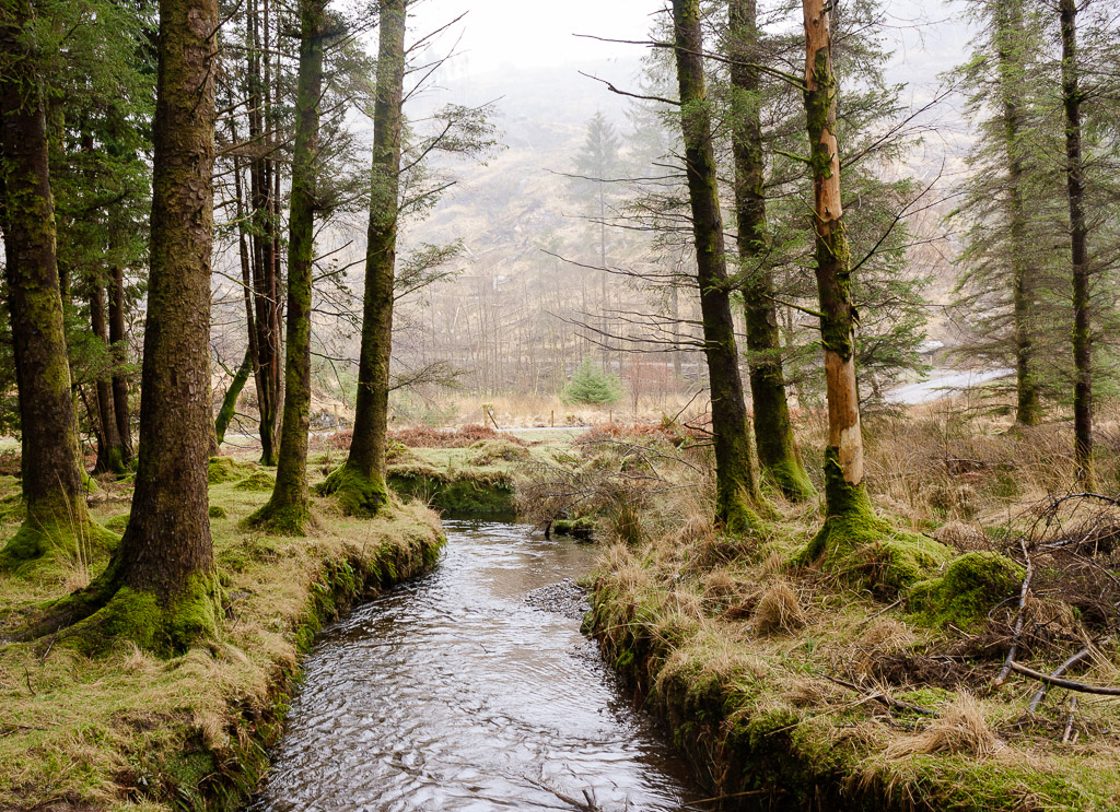 Hiking Ireland: Gougane Barra Forest Park